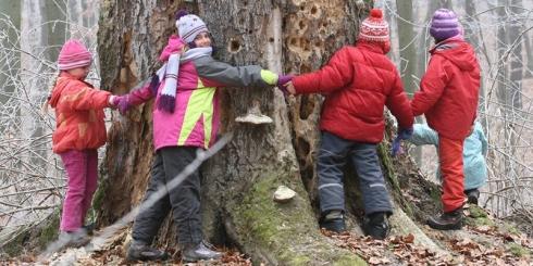 Kiderült, hogy mi fán terem az erdő