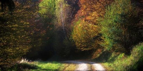 """""""Nemzeti Kincsünk az Erdő"""" Országos geocaching verseny"""