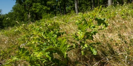 Erdősítés a termőföldek védelmében