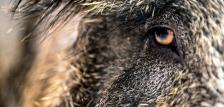 Megjelent új vadászati árjegyzékünk